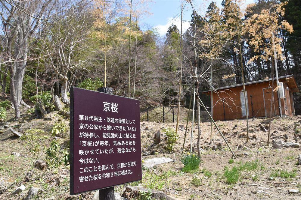 葛尾大尽にゆかりの京桜を模して植樹されたサクラ