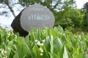 五十人山山頂に咲くスズラン