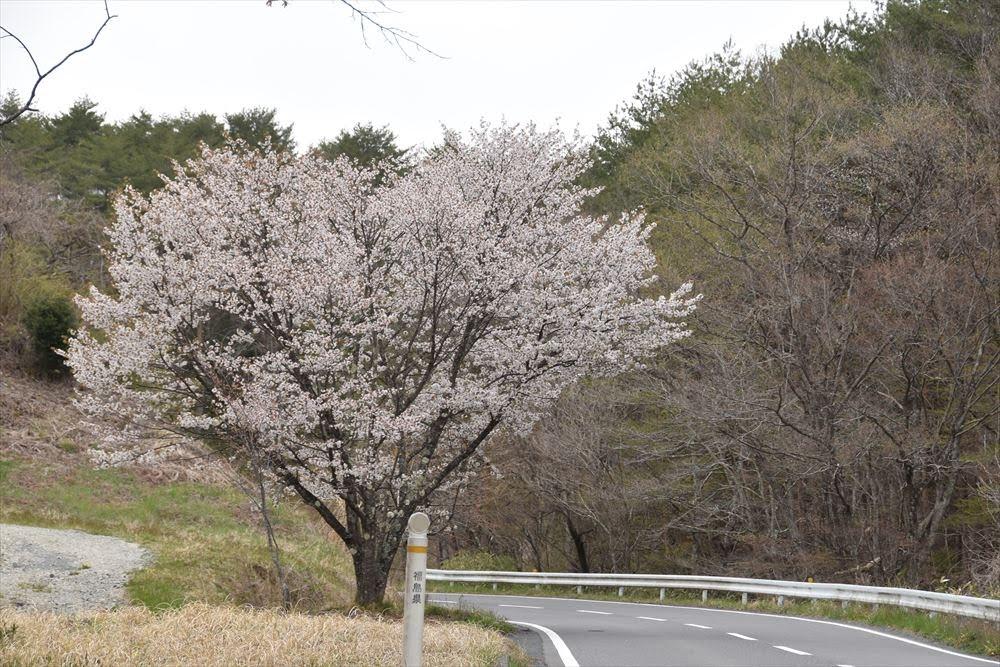 幸せのハート形の桜