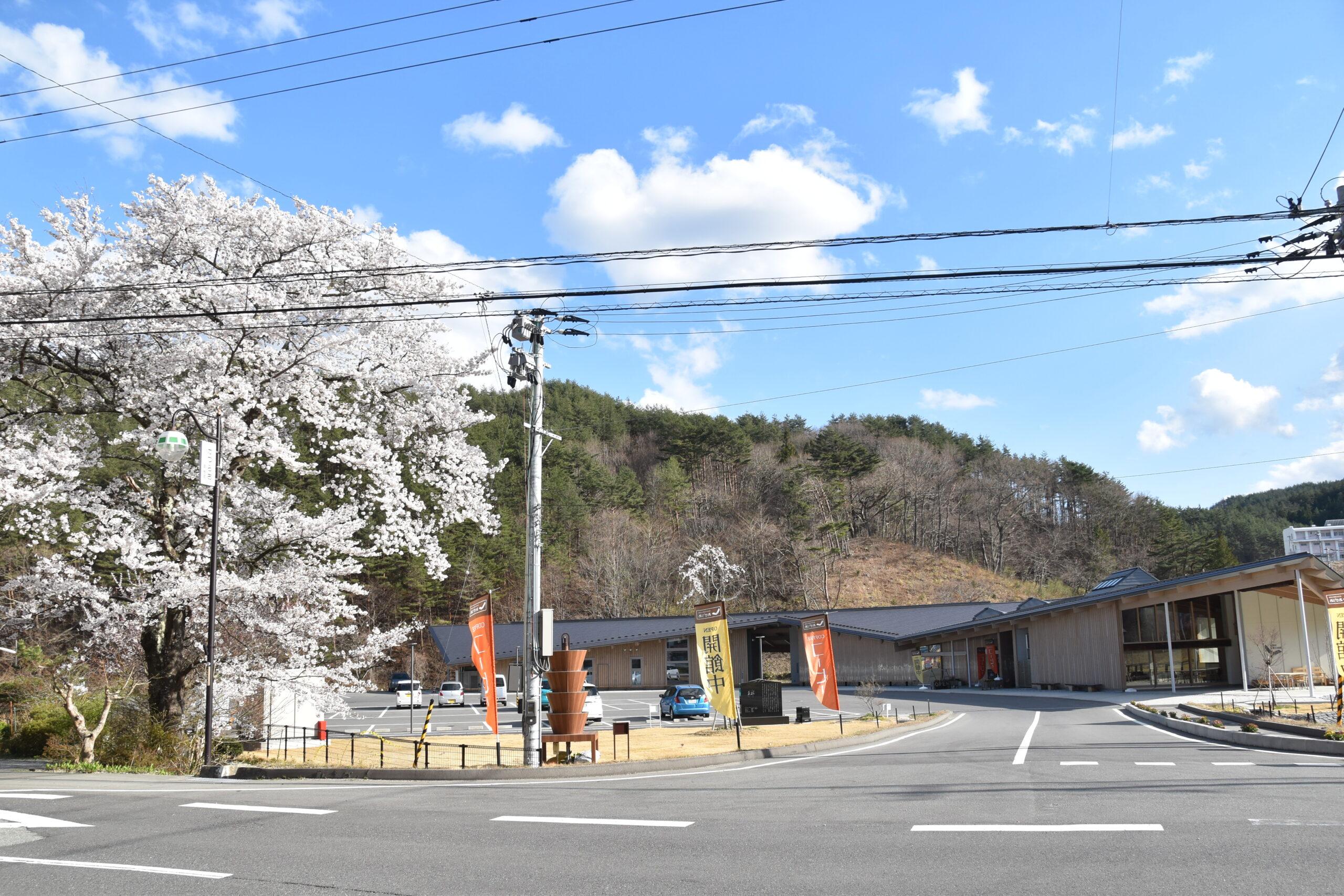 葛尾村復興交流館あぜりあと満開の桜